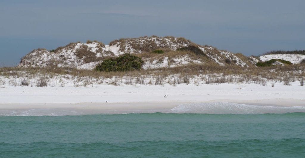 Shell Island beach and green water with gulls on the beach and grasses covering the dunes in the back