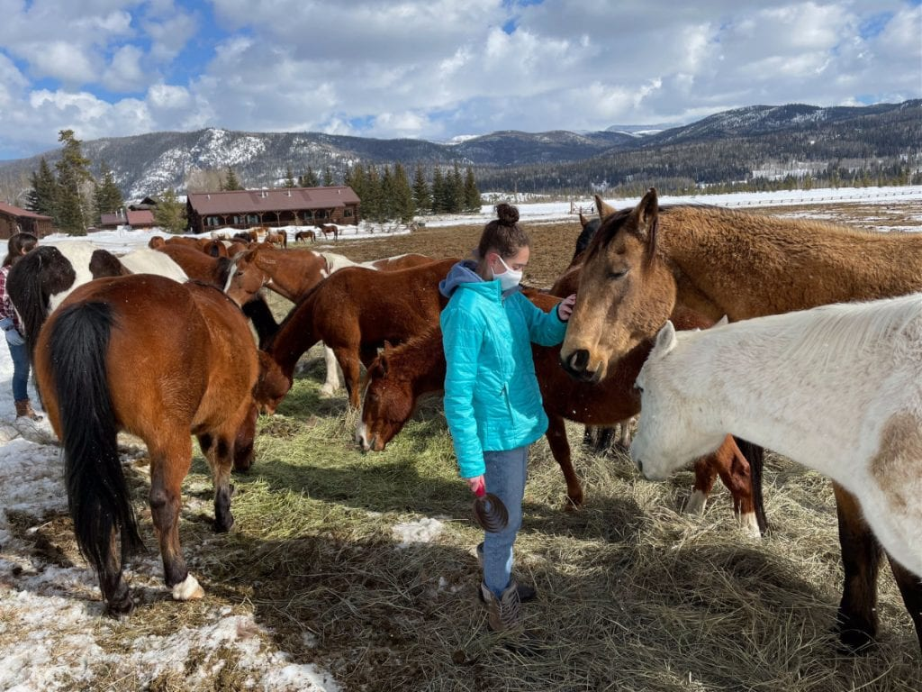 Girl in blue coat petting horses in paddock