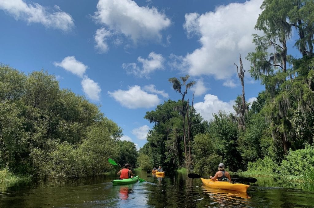 group of kayakers paddling through cypress forest at Shingle Creek