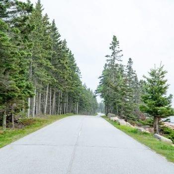 road between pine trees on the Schoodic Peninsula