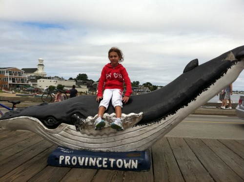 Best things to do in Cape Cod with Kids - Go on a whale watch trip in Provincetown
