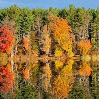 Fall foliage colors in Lincoln Woods RI