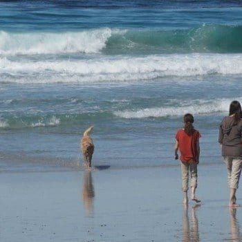 Visiting Carmel with Kids: find out why this seaside California village is a delight for families.